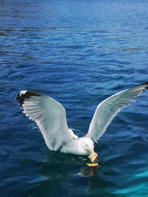 Möwe im Meer von Alghero