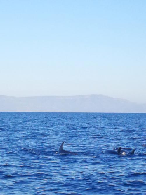 Avistamiento de delfines en la costa de Alghero
