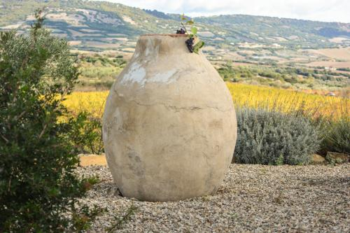 Amphora in the vineyard