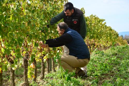 Grape and quality control