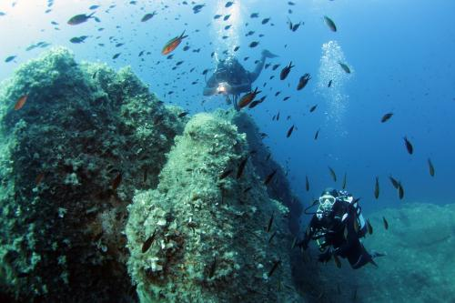 Diving among the seabed and the island's fish