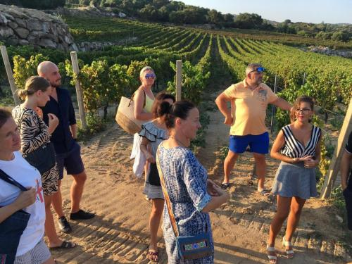 Grupo de personas durante la visita guiada a los viñedos de Cardedu