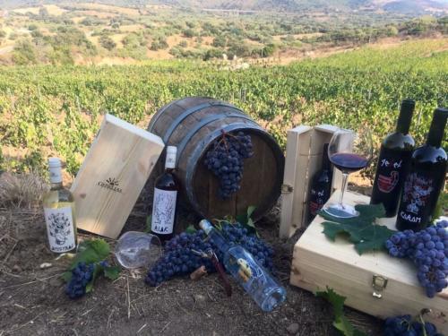 Barriles y botellas de vino en un viñedo en Cardedu