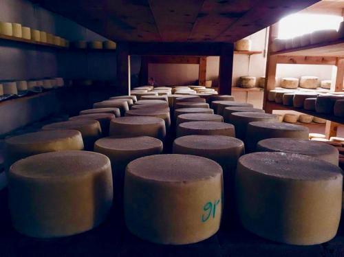 Pecorino cheese production