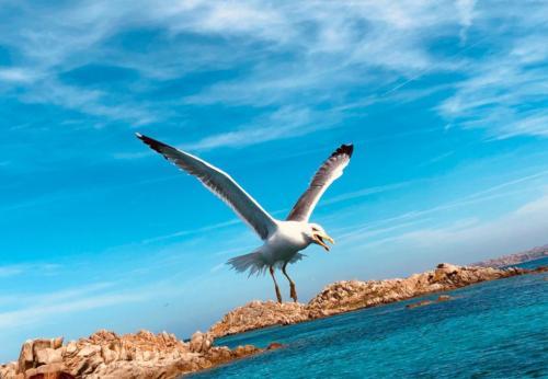 Seagull and blue sea