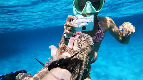 Snorkeling e foto nell'Arcipelago di La Maddalena