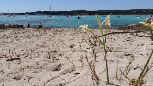 Sosta in spiaggia durante escursione in motoscafo nell'Arcipelago di La Maddalena