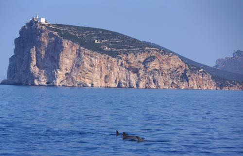 Dolphins swim in front of Capo Caccia in Alghero