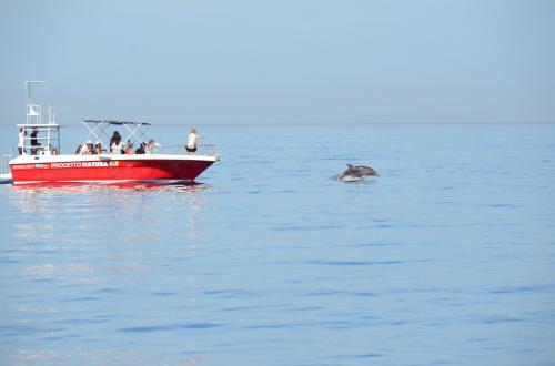 Avvistamento delfini nel Golfo di Alghero