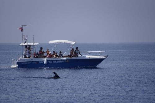 Dolphin watching during the excursion to Alghero