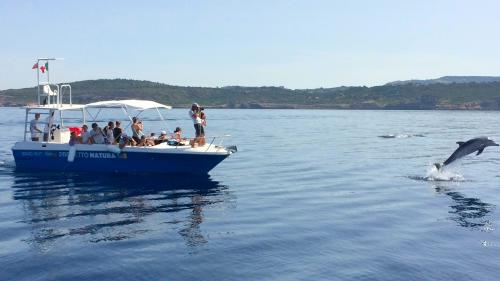 Dolphin sighting and photography in the Gulf of Alghero