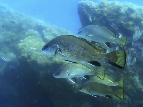 Fish in the Gulf of Alghero