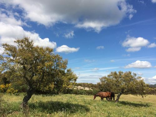 Animales salvajes en el territorio de Alghero.