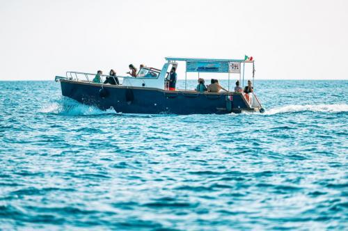 Holzgozzo segelt von Asinara in Richtung Porto Torres